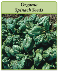 organic-spinach-seeds-logo.png