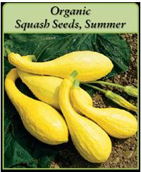 organic-squash-seeds-summer-logo.png