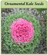 ornamental-kale-seeds-logo.png