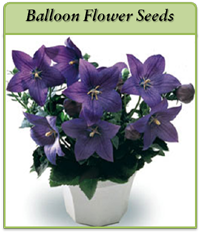 p-balloon-flower-seeds-logo.png
