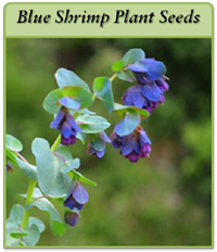 p-blue-shrimp-plant-seeds-logo.png