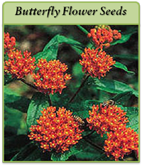 p-butterfly-flower-seeds-logo.png