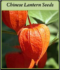 p-chinese-lantern-seeds-logo.png