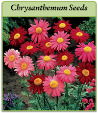 p-chrysanthemum-seeds-logo.png