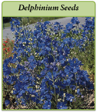 p-delphinium-seeds-logo.png
