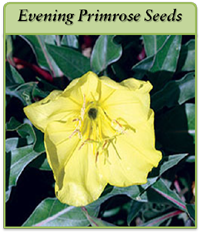 p-evening-primrose-seeds-logo.png