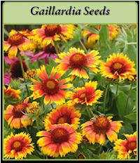 p-gaillardia-seeds-logo.png
