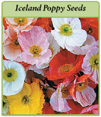 p-iceland-poppy-seeds-logo.png