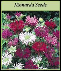p-monarda-seeds-logo.png