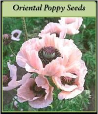 p-oriental-poppy-seeds-logo.png