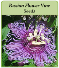 p-passion-flower-vine-seeds-logo.png