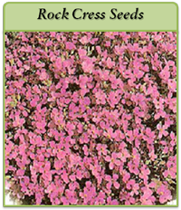 p-rock-cress-seeds-logo.png