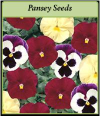 pansey-seeds-logo.png
