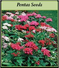 pentas-seeds-logo.png