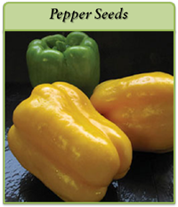 pepper-seeds-logo.png
