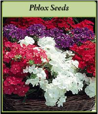 pholx-seeds-logo.png