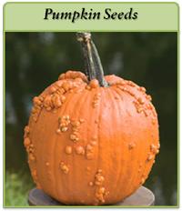 pumpkin-seeds-logo.png
