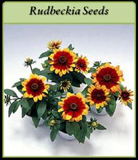 rudbeckia-seeds-logo.png