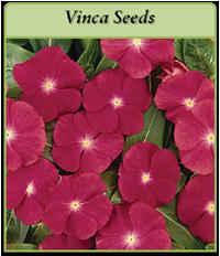 vinca-seeds-logo.png