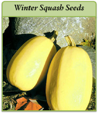 winter-squash-seeds-logo.png