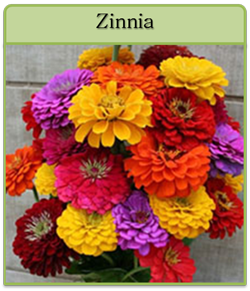 Zinnia Cut Flower Seeds