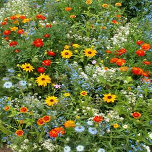 Blooming Color Wildflower