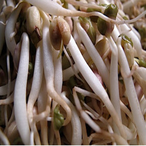 Bean Mung Bean Organic Sprouting Seeds