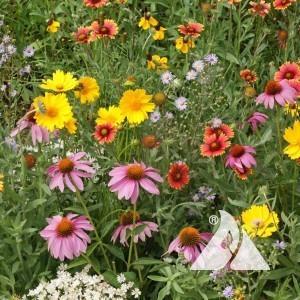 Honey Bee Pollinator Seed