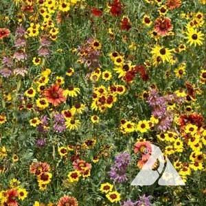 Eastern Honey Bee Pollinator Seed