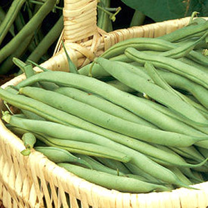 Organic Bush Bean Seeds, Provider