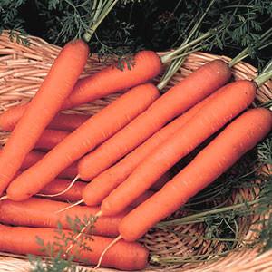 Organic Carrot Seeds, Scarlet Nantes