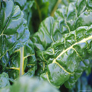 Organic Swiss Chard Seeds, Giant Fordhook