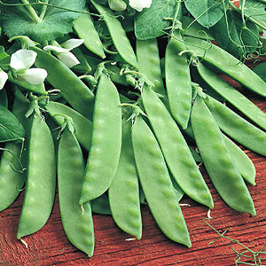 Organic Pea Seeds, Oregon Giant Snow