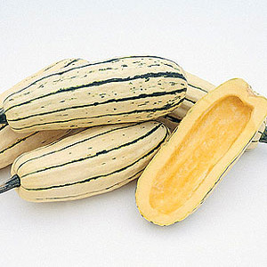 Organic Winter Squash Seeds, Delicata Zeppelin