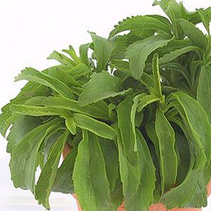 Organic Stevia Herb