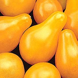 Organic Tomato Seeds, Yellow Pear
