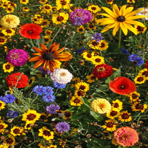 Easy Care Children's Garden Wildflower