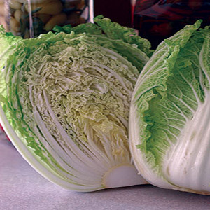 Pacifiko YR Chinese Cabbage