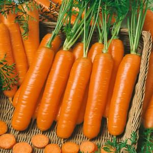 Little Fingers Carrot