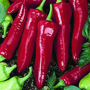 NuMex Big Jim Anaheim Chili Pepper
