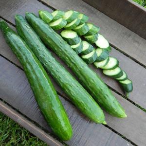 Tasty Green Cucumber