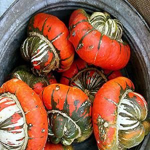 Turks Turban Winter Squash-Gourd