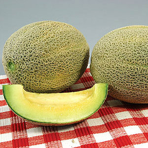 Organic Eden Gem -Rocky Road Melon