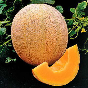 Hale's Best Jumbo Cantaloupe Melon