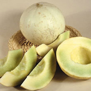 Earlidew Honeydew Melon