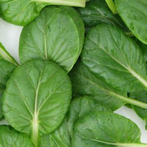 Tat-Soi Organic Asian  Mustard  Greens