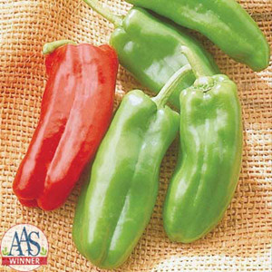 Marconi Giant Green Sweet Tapered Bell Pepper