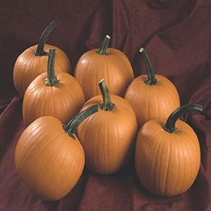 Hijinks Pumpkin