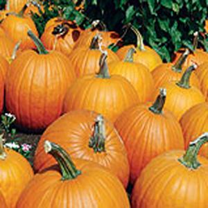 Sorcerer Pumpkin