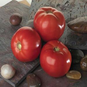 Bella Rosa Tomato Seeds